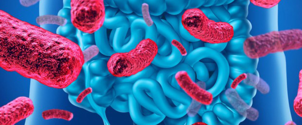 webinar microbiota